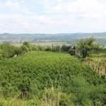 Felülről a szőlő